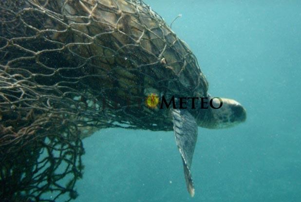 """Conclusa la stagione """" Eging """", vincono le reti, nasse e pesca sub!"""