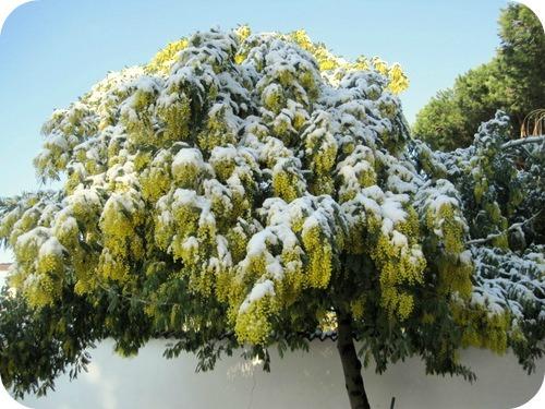 Venerdi sera possibili nevicate sui Peloritani sopra i 700-800 mt con accumulo