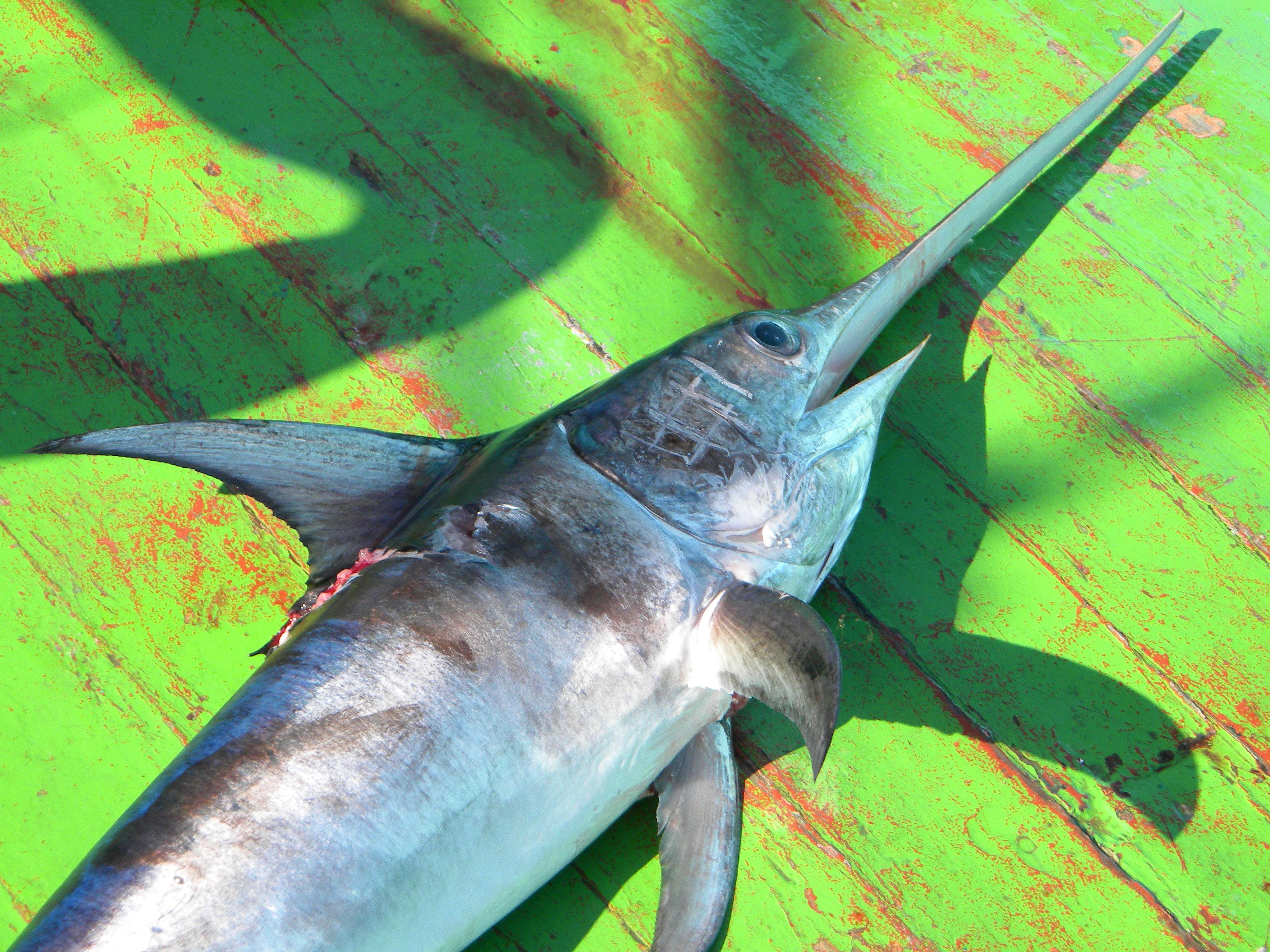 L'antica pesca del pesce spada nello Stretto di Messina.