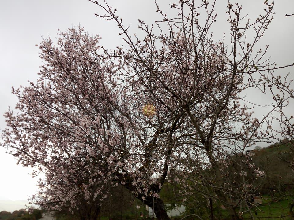 Inizio di settimana ventoso, qualche pioggia fugace martedì.